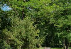 Park Zachodni znajdujący się w pobliżu osiedla Lokum da Vinci