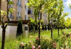 Drzewa i krzewy na terenie inwestycji Lokum di Trevi