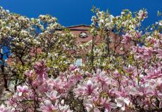 Osiedle Lokum Vena - kwitnący starodrzew
